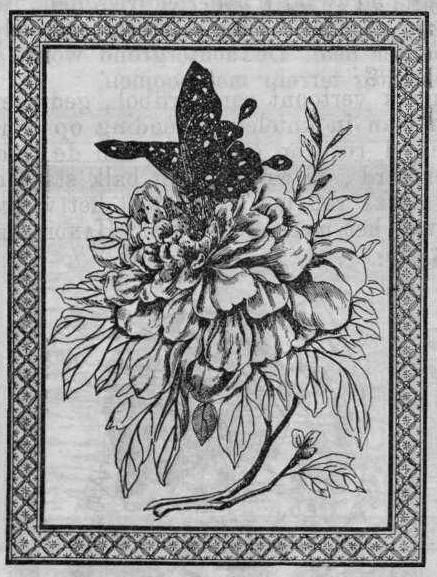Hotz s'Jacob & Co.: 1900 trade mark registration - flower and butterfly