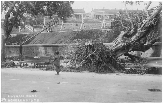 Uprooted trees on Nathan Road - 1923