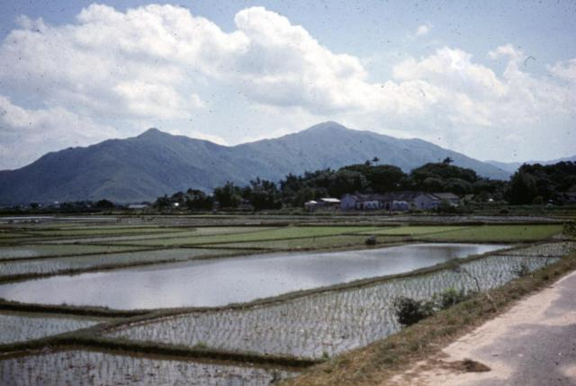 Paddy Fields East of Yuen Long