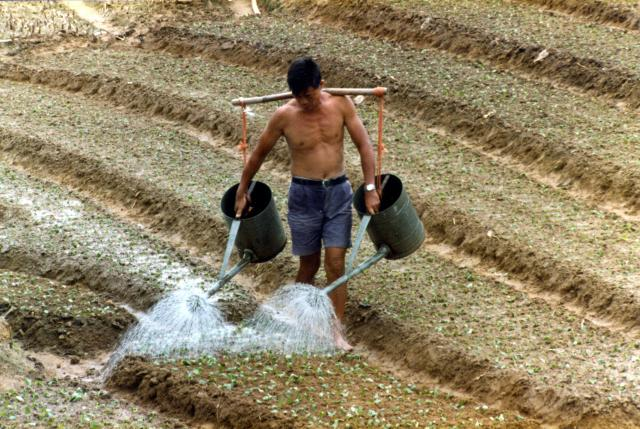 Watering the crops.