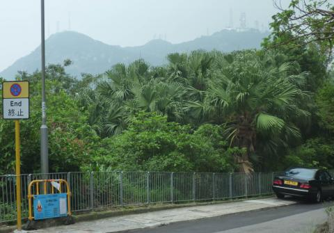 Victoria Peak from Plunkett's Road