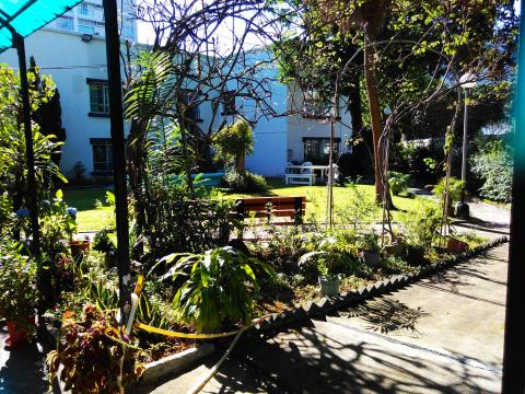 Lovely garden at 63 Cumberland Rd 2017-12-02_13-51-12_689.jpg