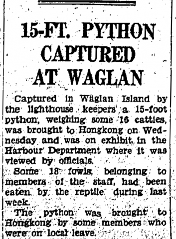 Python captured at Waglan Island-HK Daily Press-20-09-1940