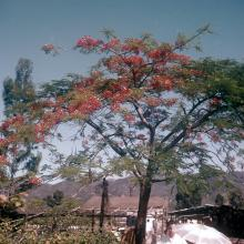 NT..Tree in Colour
