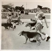 Queens Birthday Parade 1957.-Police Dogs.—-R.A.F.?