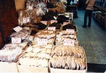 Dried fish shop