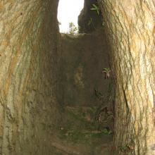 Tunnel behind the quarry