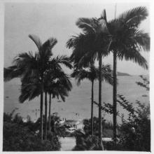 Repulse Bay- Palm Trees-1957