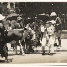 Cow and people on street